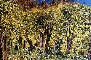 Orange Grove, Gaucin